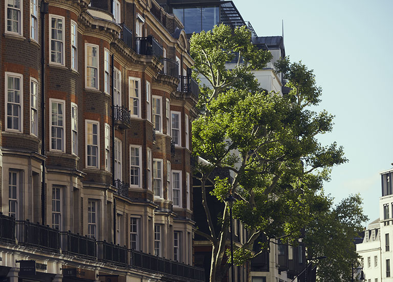 street-tree-london-goodbody